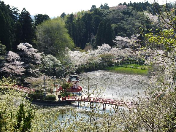2009_0410春 ソロツー0010