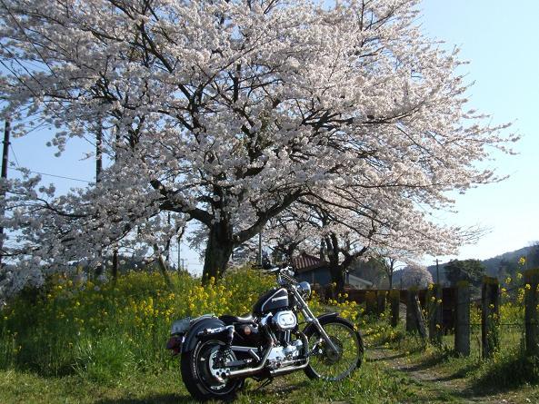 2009_0410春 ソロツー0022