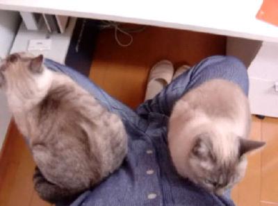 家猫日和 猫の座布団になる日々。