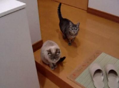 家猫日和 出迎え&トイレ