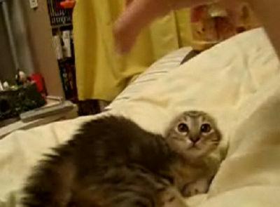 スイッチ入っちゃった子猫