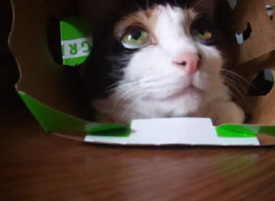猫にロックオンされる瞬間