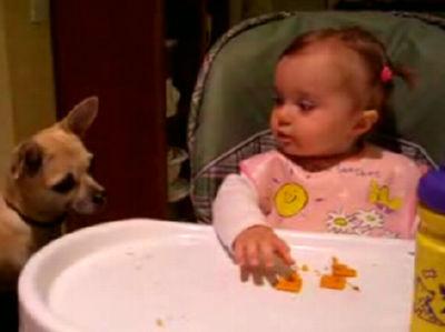 チワワにクッキーをあげる赤ちゃん