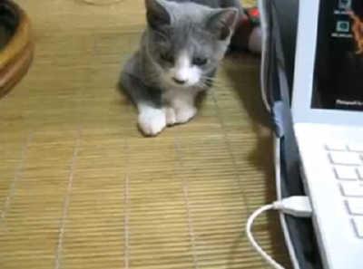 ハロウィンの日の子猫