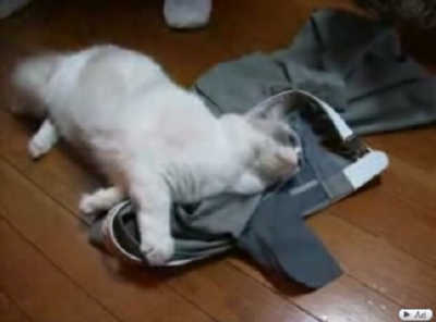 制服の匂いが堪らない猫