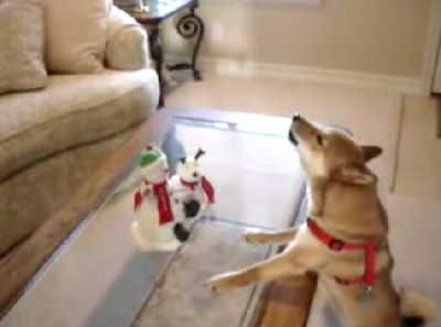 クリスマスが待ち遠しい柴犬
