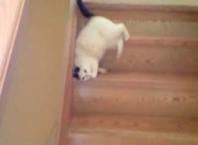 階段の降り方選手権で優勝しました!