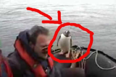 シャチに追われているペンギンが、人間の乗るボートへと避難