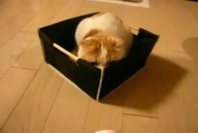 箱の中から狙うポッケ