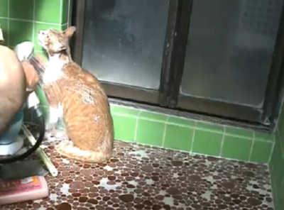 お風呂で洗われる猫たち&飼い主さん