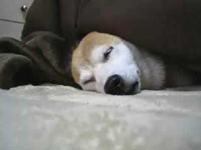 【柴犬りょう&ローズ】りょう入浴中♪(08年11月28日)