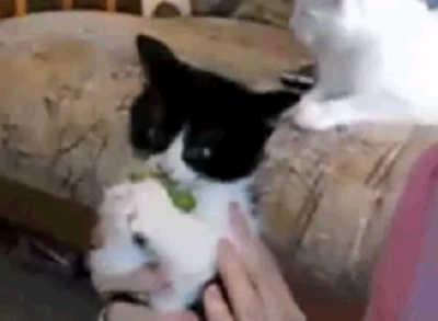 猫はブロッコリー好き?