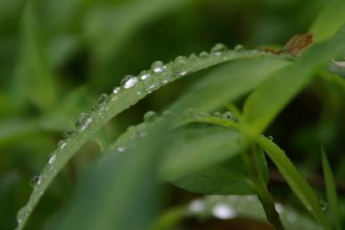 梅雨空の下4