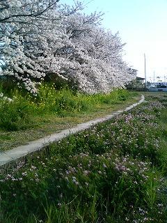 桜2 2009