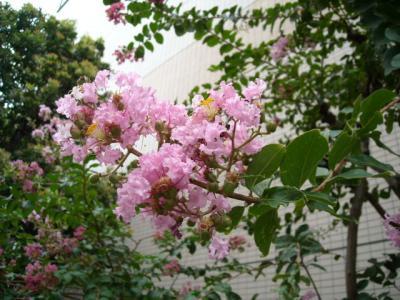 沿道沿い花⑥