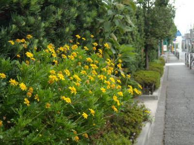 沿道沿い花①