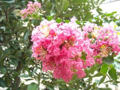 沿道沿い花④