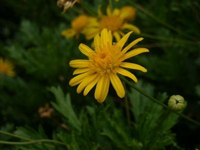 沿道沿い花②