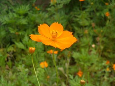 沿道沿い花⑪