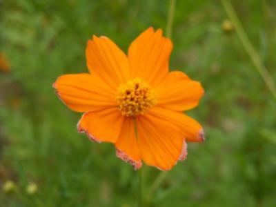 沿道沿い花⑫
