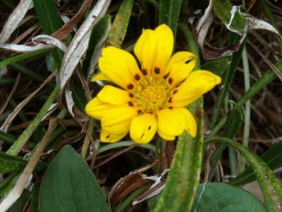 沿道沿い花⑧