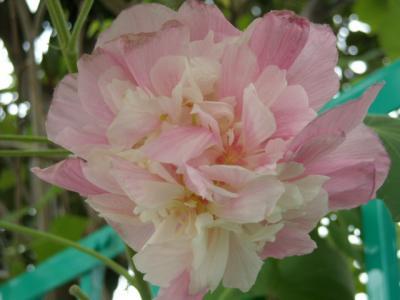 沿道沿い花⑩