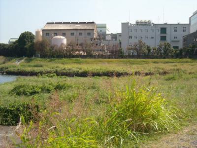 001多摩川河口付近河川敷