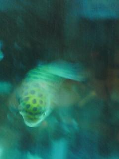 fugu116.jpg