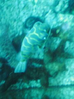 fugu120.jpg