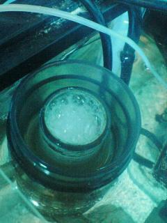 fugu125.jpg