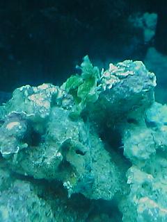 fugu132.jpg