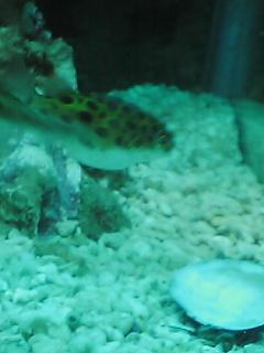 fugu140.jpg