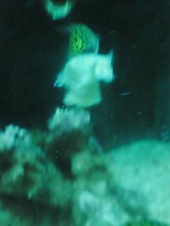 fugu142.jpg