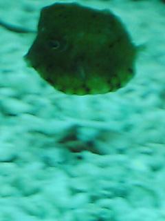 fugu156.jpg