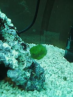 fugu159.jpg