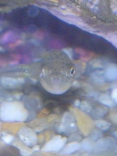 fugu169.jpg