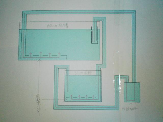 fugu196.jpg