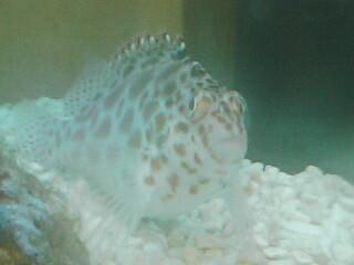 fugu207.jpg
