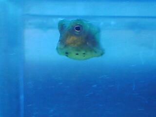 fugu209.jpg