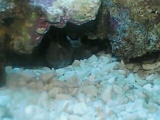 fugu215.jpg
