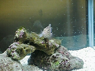 fugu253.jpg