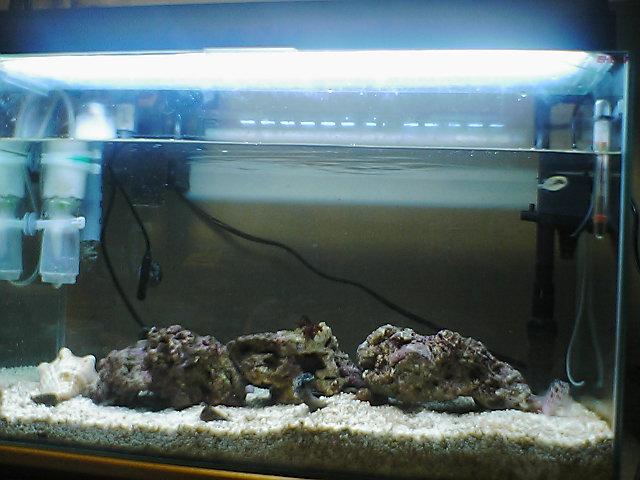 fugu270.jpg