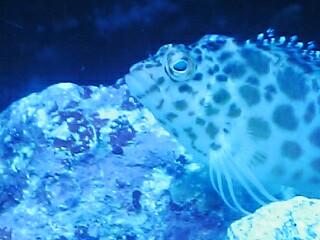 fugu87.jpg