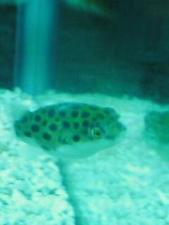fugu92.jpg