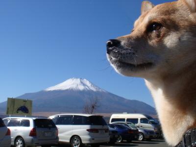 富士より大きな?