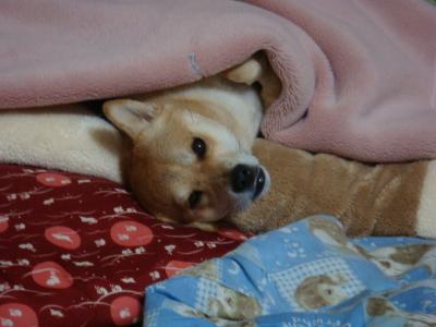 毛布の下では・・・?
