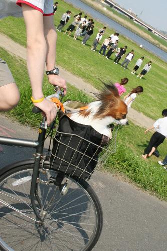 とーちゃんの自転車に乗って