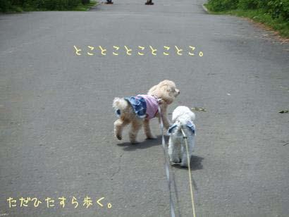 散歩のコピー