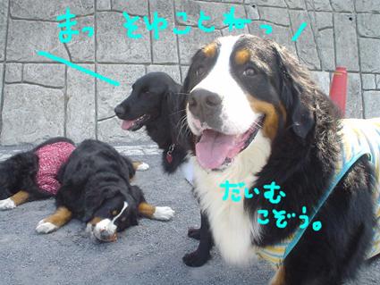 daimukozou.jpg