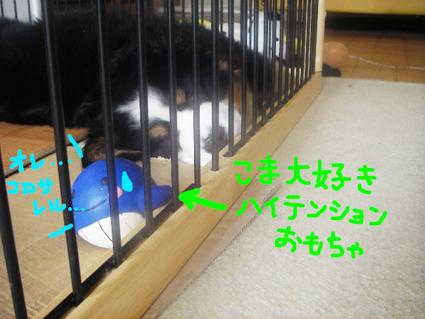 daisuki_20080415155620.jpg